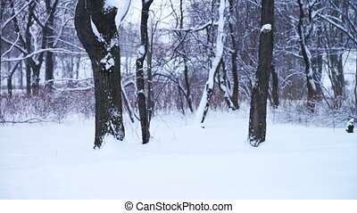 Old man with walking stick in park - PETROZAVODSK, RUSSIA -...