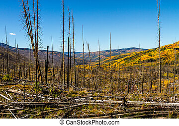 Fall in Steamboat Springs Colorado - View of mountain slopes...