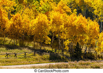 Fall in Steamboat Springs Colorado - Rustic wooden ranch...