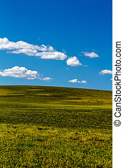 Fall in Steamboat Springs Colorado - Bright green rolling...