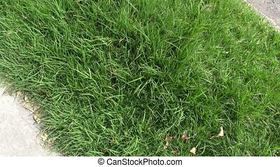 Grass, Lawns, Stems, Plant Life, Na