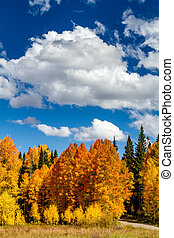 Fall in Steamboat Springs Colorado - Mountain meadow filled...