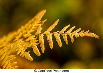 Fall in Steamboat Springs Colorado - Close up of forest fern...