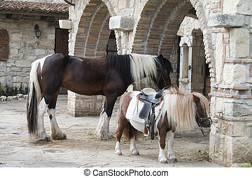 big horse and small pony to the stable