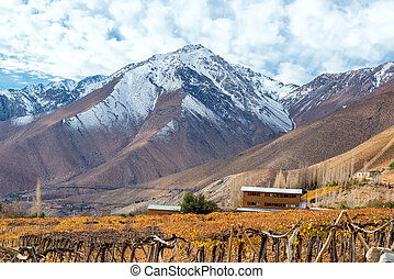 Grape Vines and Mountains - Grape vines used for pisco with...