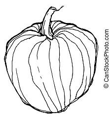 sketch of ripe pumpkin on white background