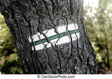 Tagging hiking path to the green and white paint on a tree...