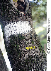 Tagging hiking trail to the yellow and white paint on a tree...
