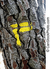 Tagging footpath with yellow paint on a tree trunk to...