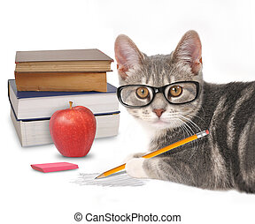 Smart Cat Writing with Books on White - A gray cat is...