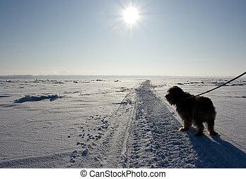 Dog in winter desert