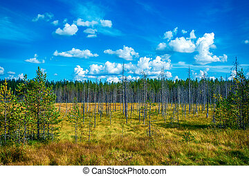 Autumn forest in a sunny day in Karelia, Russia