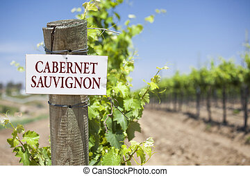 Cabernet Sauvignon Sign On Vineyard Post - Cabernet...
