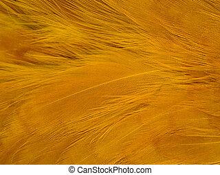 Feather Background Texture - Orange chicken feather...