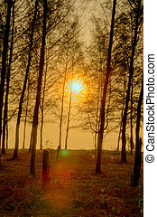 Beautiful scene in forest with sun