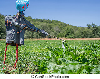 Scarecrow over potato and pumpkin platation - Side view of...
