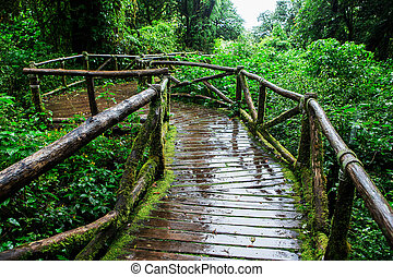 Beautiful rain forest at ang ka nature trail in doi inthanon...