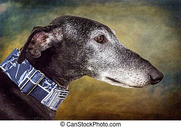 Greyhound dog portrait head detail