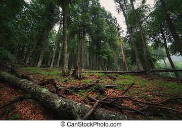Deciduous forest with fallen trees after rain