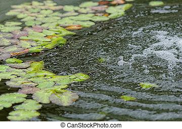 Fairy veil on the pond