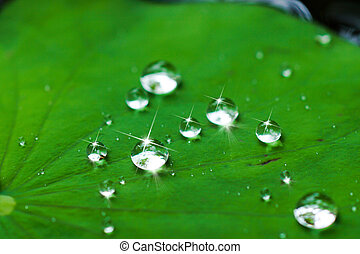 water drop on lotus leaf.