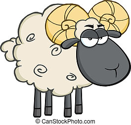 Angry Black Head Ram Sheep