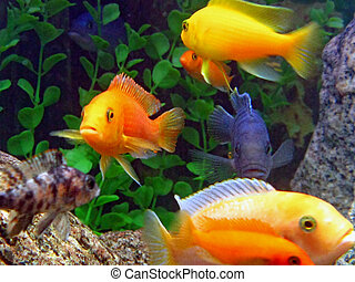 assortment of fish in an aquarium