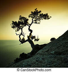 Tree and sea at sunset. Crimea landscape. Nature background