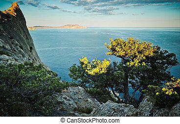 albero, mare, tramonto, Crimea, paesaggio