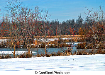 Blue sky and colorful twigs and branches brighten the winter...