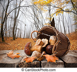 Mushrooms and autumn forest - Mushrooms in a basket and...