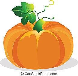 Pumpkin vector illustration.