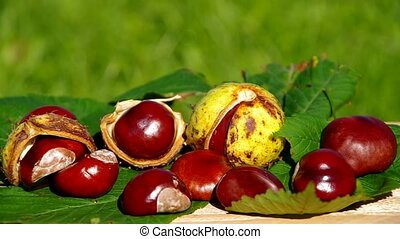 The fruits of nature in autumn, conkers on wooden table