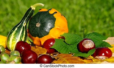 The fruits of nature in autumn