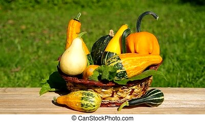 Ornamental gourds in basket