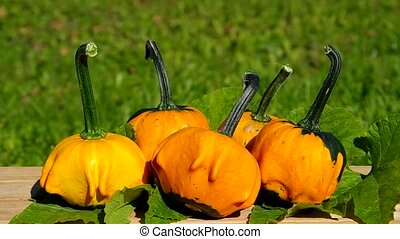 Ornamental pumpkins on wooden table