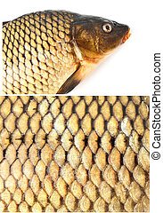 Carp dietary fish, squama - Carp dietary fish isolated on...
