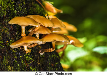 Inedible mushrooms in the forest on a tree trunk. - Inedible...