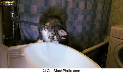 Cat drink water from under the crane