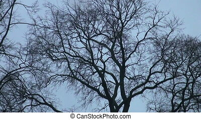 The branch of a tree without leaves against the sky