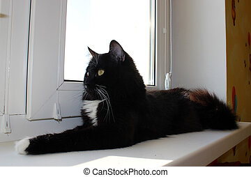 cat lying on the window-sill