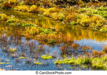 Fall in Steamboat Springs Colorado - Close up of reflection...