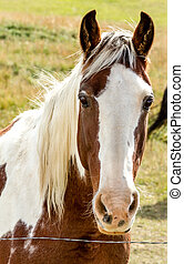Fall in Steamboat Springs Colorado - Close up of brown and...
