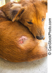 Injured after fight with other dog - Injured after fight...