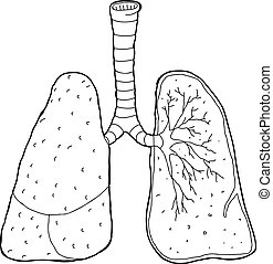 Outlined Cross Section Lungs - Cross section drawing of...