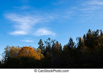 Autumn tree line with blue sky