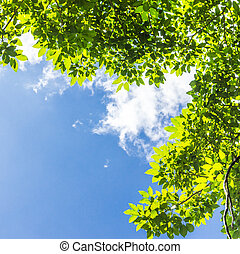 green leaves against blue sky