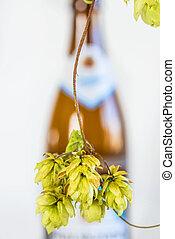 ripe hop cones with beer bottle