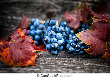 Ripe grapes on autumn harvest at vineyard with leaves and dark, wooden background