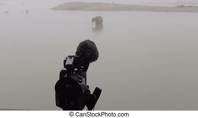 Grizzly Bear and camera - Grizzly Bear with salmon and...